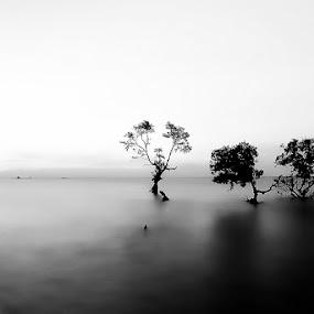 by Martin Marthadinata - Landscapes Beaches ( black and white, b and w, landscape, b&w, monotone, mono-tone )