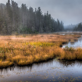 Algonquin Pond by William Ducklow - Landscapes Waterscapes ( algonquin fall 215, william david photography )