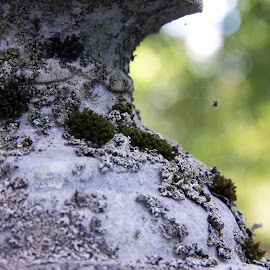 by Art Tilts - Nature Up Close Other plants ( green, fungus, white, closeup, statue, headstone )