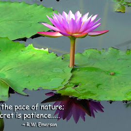 adopt the pace of nature.. by Asif Bora - Typography Quotes & Sentences