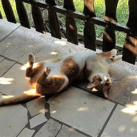 relaxation by Marija Čaušić - Animals - Cats Playing ( fence, cat, shadow, stone, terraces )