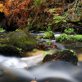 Waters by Gil Reis - Landscapes Waterscapes ( water, macro, life, bio, nature, forest, portugal )