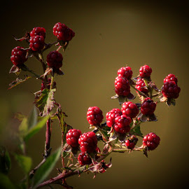 by Cheryl Hudnall Kincaid - Nature Up Close Other plants