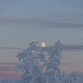 Frozen forest by Benny Høynes - Landscapes Forests ( moon, winter, cold, forest, arctic, frozen,  )