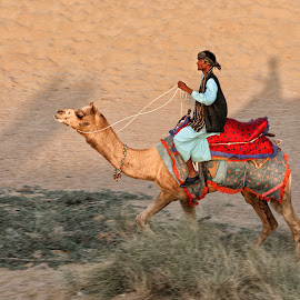 Camel Driver by Jos Meubis - City,  Street & Park  Street Scenes (  )