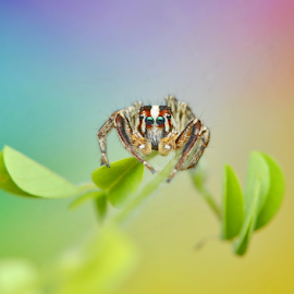 Little Spider From The Rainbow by Niney Azman - Animals Insects & Spiders