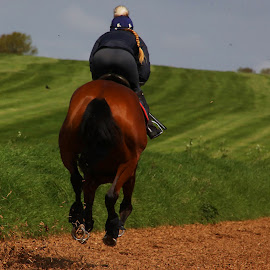On the gallops. by Wilson Beckett - Sports & Fitness Other Sports