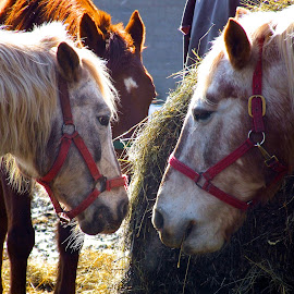 by Terry Sharrieff - Animals Horses