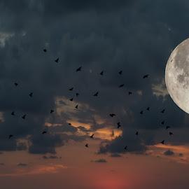 Full Moon Ahead by Allie Cook - Digital Art Abstract ( clouds, flock of birds, moon, sky, birds )