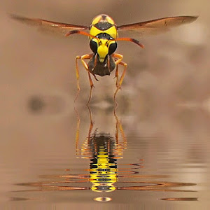 water_reflection__1461310783260.jpg