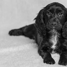 Soft Puppy blanket.jpg