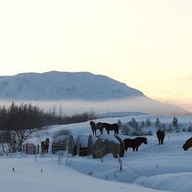 Laugarás by Sólrún Ragnarsdóttir - Landscapes Prairies, Meadows & Fields