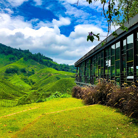 Tea plantation by Jude Wei - Buildings & Architecture Other Exteriors ( tea )