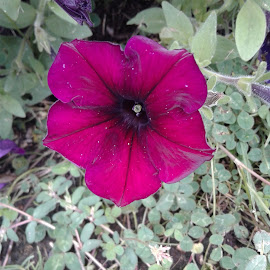 The Flower  by Tahjee Galberth - Nature Up Close Gardens & Produce ( nature, plants, natural, garden, flower )