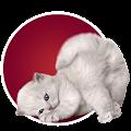 Game Угадай животное по фото APK for Windows Phone