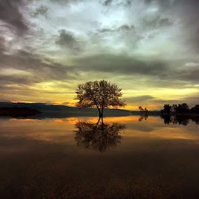 Twin tree by Χρήστος Λαμπριανίδης - Landscapes Waterscapes