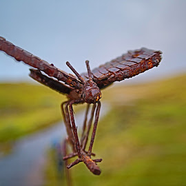 rusting dragonfly by Gordon Drummond - Artistic Objects Other Objects (  )