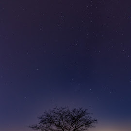 The lonely tree by Amir Ehrlich - Landscapes Deserts ( mountains, moonset, sky, desert, tree, stars, night, nightscapes, moonlight )