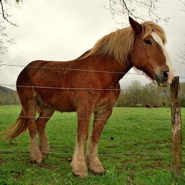 by Brenda Hall - Animals Horses