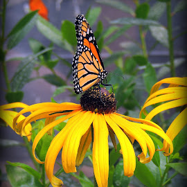 by Melissa Fulmer - Flowers Flowers in the Wild