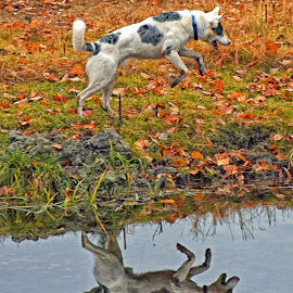 Playful Reflection by Twin Wranglers Baker - Animals - Dogs Playing