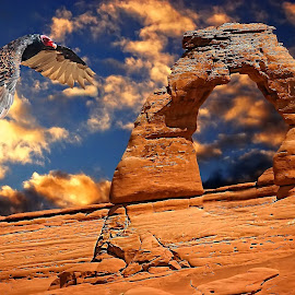 Vultur at Arches NP by Gérard CHATENET - Digital Art Animals