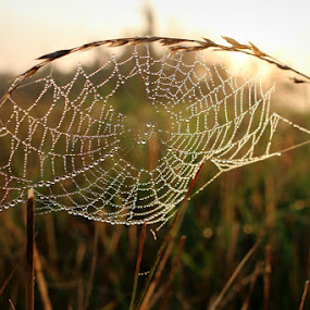 by Crystal  Wilson - Nature Up Close Webs (  )
