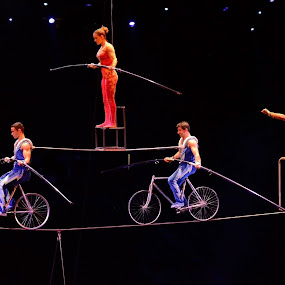 Ringling Bros 2013 by Stephen Beatty - News & Events Entertainment ( ringling bros, high wire act )