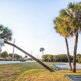 Only exception to speed limit is the Wind by Rajib Bahar - Nature Up Close Trees & Bushes ( water, tree, florida, water faucet, bent )