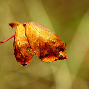 The last leaf by Delia Galhotra - Nature Up Close Leaves & Grasses ( digiphotography, nature, autumn, green, plants, leaf, flowers, photography )