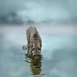 A Fuel For Life  by Michael Dalmedo - Digital Art Animals (  )