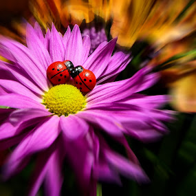 Love Bugs by Dave Walters - Flowers Single Flower ( nature, mix fz2500, digital art, moody, flower )