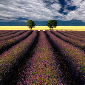 Twins by Izidor Gasperlin - Landscapes Prairies, Meadows & Fields ( provence, lavender, landscape )