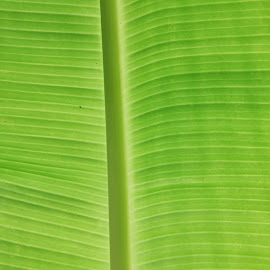 Palm Leaf in Maui by Karen Coston - Nature Up Close Leaves & Grasses ( palm, maui, green, tropical plants, hawaii )