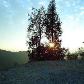 NATURE'S GIFT by Preetam Bhattacharya - Nature Up Close Trees & Bushes