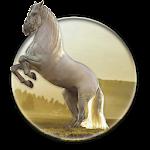 Running Horse HD Wallpaper Icon