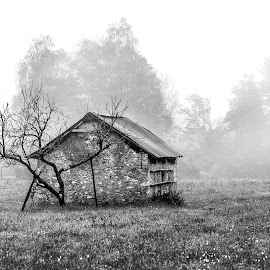 cottage by Luigi Alloni - Black & White Landscapes ( cottage b&w countryside fog tree field luigi alloni )