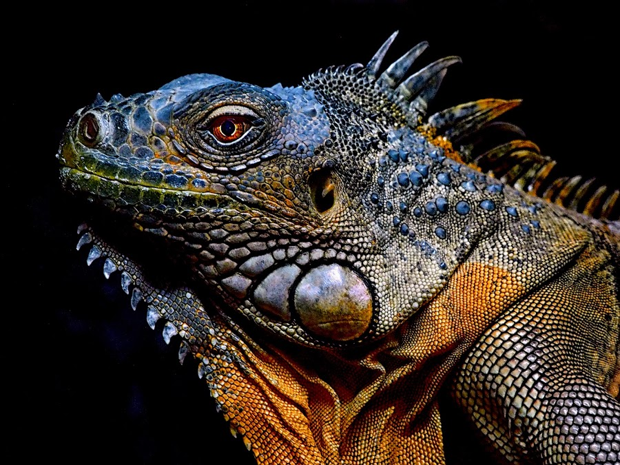 by Stanley P. - Animals Reptiles (  )