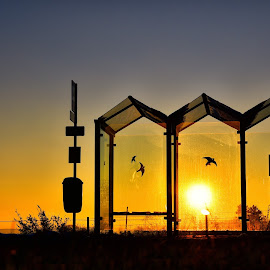 Bus Stop by Marco Bertamé - City,  Street & Park  Street Scenes ( orange, winter, blue, sunset, silhouette, bus stop )