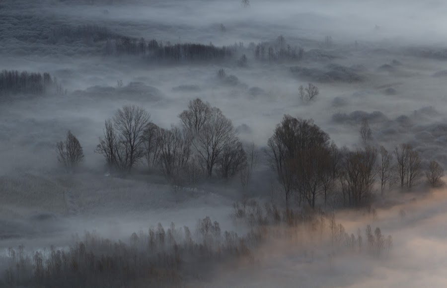 Morning mist by Pietro Ebner - Landscapes Prairies, Meadows & Fields ( tree, fog, trees, morning, mist,  )