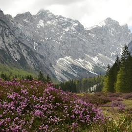 Rsje spomladi by Bojan Kolman - Nature Up Close Other plants (  )