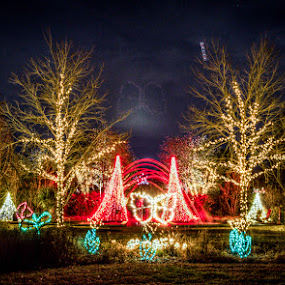 Daniel Stowe Botanical Garden by Robert Harmon - Public Holidays Christmas ( lights, bracketed, hdr, christmas, garden )