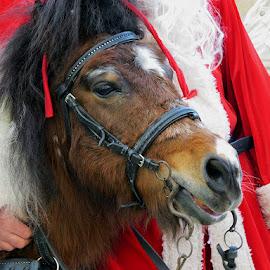 .....jako rado razgovara....... by Katica Pecigoš-Kljuković - Animals Horses