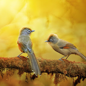 by Sasi- Smit - Animals Birds