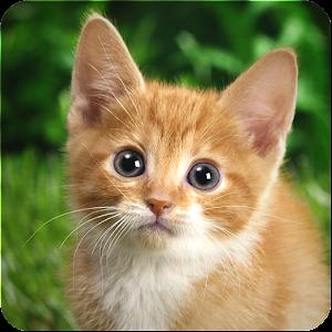 Google Cat Game