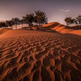 Desert by Walid Ahmad - Landscapes Deserts ( desert, uae, trees, landscape )