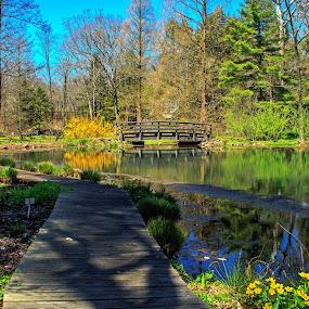 by Judy Florio - City,  Street & Park  City Parks ( buck garden, bridge, flowers, landscape, spring, pond )