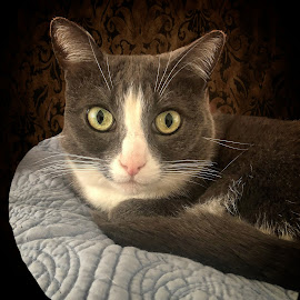 Mesmizing eyes by Sandy Scott - Animals - Cats Portraits ( pets, domestic animals, cat portrait, feline, cat, cat eyes, portrait, eyes )