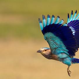 by Prasanna Bhat - Digital Art Animals