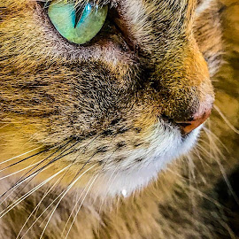 Jekka  by Taz Graham - Animals - Cats Portraits ( cats )